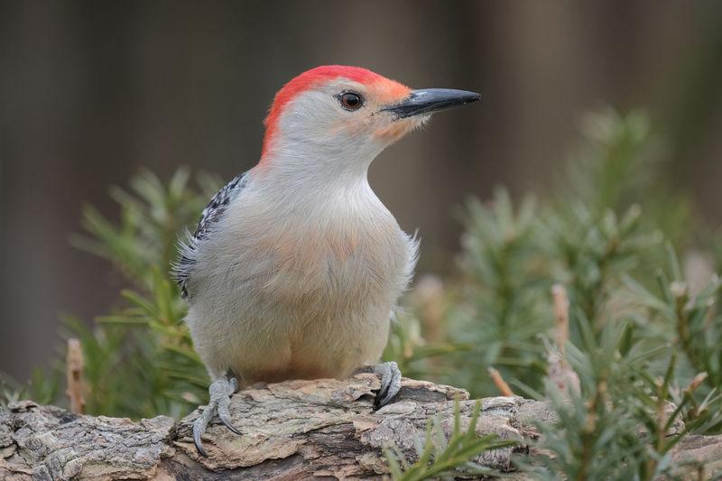 Close-up of a bird perching on rock