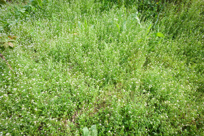 green wild plants Green Color Plant Growth Full Frame Beauty In Nature Land Backgrounds Nature No People Day Foliage Tranquility Field Lush Foliage Freshness Outdoors Tree Grass Flower Flowering Plant Glass - Material Plant Wild Plants