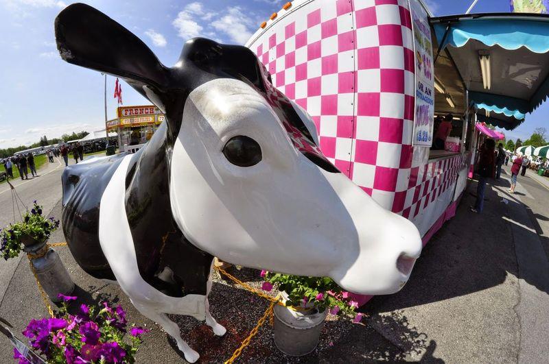 Animal Themes Carnival Fisheye Staue  Whimsy Wide Angle