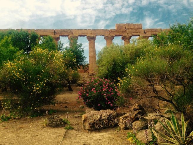 The Week On Eyem Low Angle View Architecture Plant Flowering Plant Aloe Vera Plant Valley Of The Temples Agrigento Sicily Columns Sky And Clouds Neighborhood Map