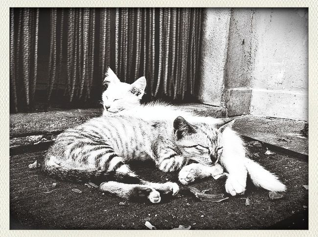 Capa Filter Cats