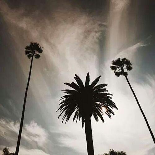 Palmtrees Deem Sundown