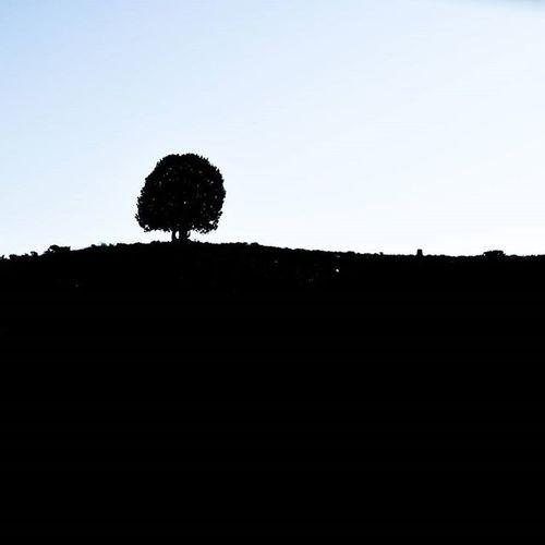 🌳 . تک درختِ تنها... سفر_به_گَزو