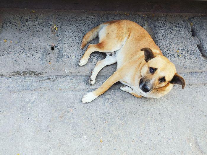 High angle view of dog on footpath