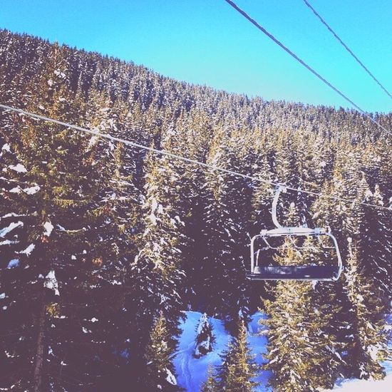 Snow Winter Cold Temperature Tree Season  Weather Forest Tranquil Scene Cable Tourism Scenics Covering Tranquility Mountain Nature Overhead Cable Car Clear Sky Non-urban Scene Shadow Beauty In Nature
