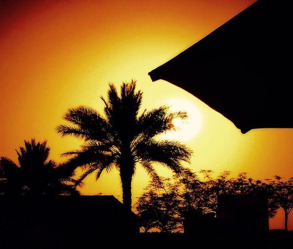 Hello World Abudhabinights Sunset #sun #clouds #skylovers #sky #nature #beautifulinnature #naturalbeauty #photography #landscape Vacation Time Enjoying The Sun Happydays😎 AbuDHabi Sunset