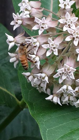 Honey Bee Animal Wildlife Beauty In Nature Blooming Close-up Day Flower Flower Head Fragility Growth Insect Leaf Nature No People Outdoors Plant Pollination
