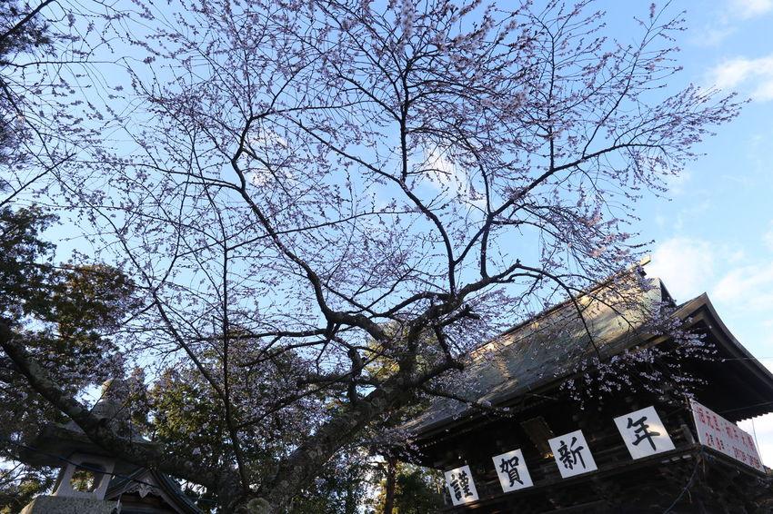謹賀新年 A Happy New Year Iwanuma Eos6d Ef20mmf2.8