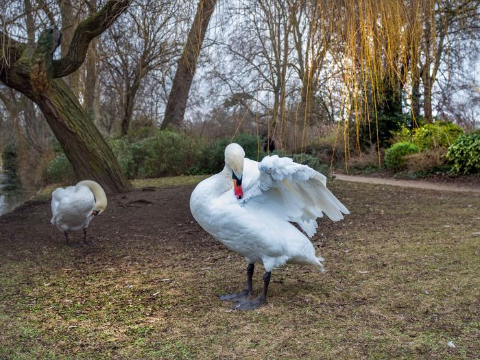 Bird White Color Animal Themes Animals In The Wild Nature No People Beauty In Nature Outdoors Day Paris, France  EyeEm Gallery EyeEm Best Shots EyeEmBestPics I Love My City The Changing City Winter One Animal Beauty In Nature Tranquility Nature Capture The Moment