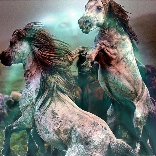 The holiday season is over. Wildlife Riding Gallop Horses Horsestagram Horseshoe Instagood Nature Field @instaghelper Horse Pretty Ponies Jockey Rider Pony Horseshow Photooftheday Mane Babyhorse Beautiful Horses_of_instagram Ilovemyhorse Grass Instahorses Horsesofinstagram wild farm riders