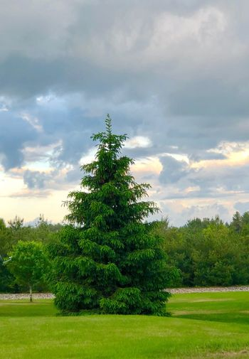 One Tree Tree Plant Sky Cloud - Sky No People Nature Christmas Green Color christmas tree Beauty In Nature Growth Outdoors Grass Field Day