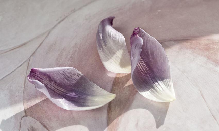 Close-up of petals