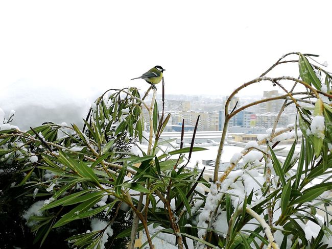 One Bird On The Top Cold Temperature Winter Wonderland Outdoors One Bird One Bird On Focus Bird Plant Growth Nature No People