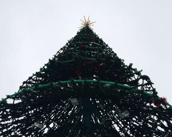 Christmas Christmas Tree Low Angle View Christmas Decoration Christmas Lights No People Sky Iphone5s Celebration