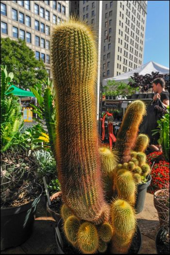 OUCH! _ Union sq. Mkt. - 10/19/16 Barrel Cactus EyeEm StreetPhotography, NYC Malephotographerofthemonth Nikkor 35mm Lens No Edits, No Filters The Journey Is The Destination