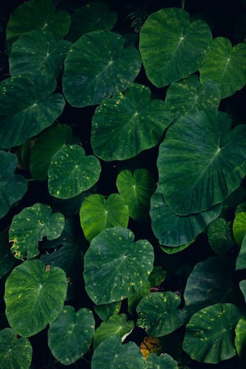 High angle view of leaves in water