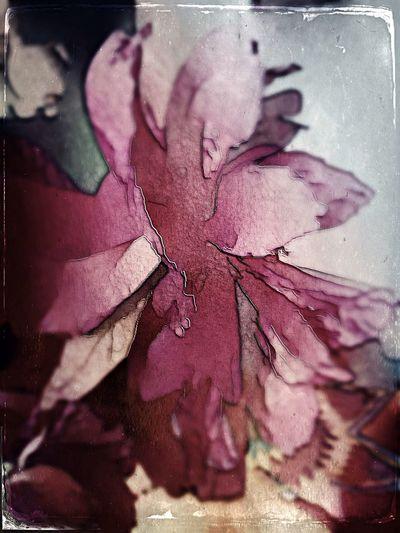 NEM Still Life Flowerporn Tintype #Hipstamatic NEM Painterly Vscocam Icolorama