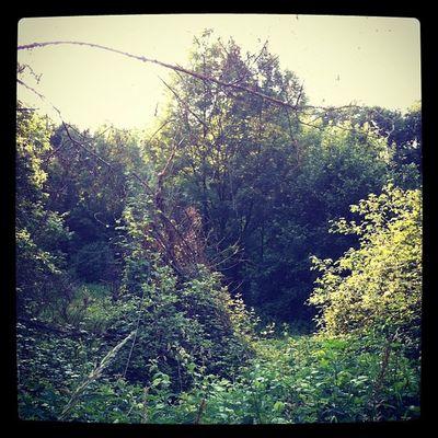 130 - « Nel mezzo del cammin di nostra vita mi ritrovai per una selva oscura, ché la diritta via era smarrita. »