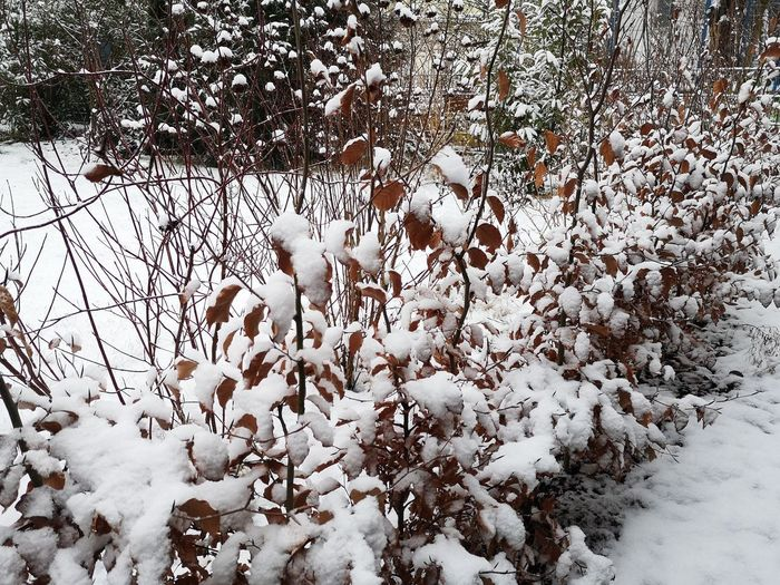 Snow covered plants on land