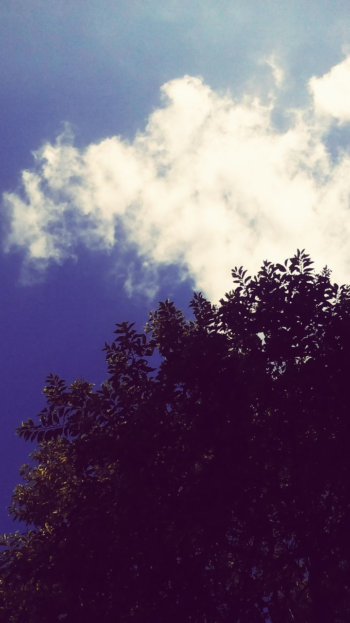 tree, low angle view, sky, nature, beauty in nature, no people, growth, outdoors, day, tranquility, cloud - sky, scenics, branch