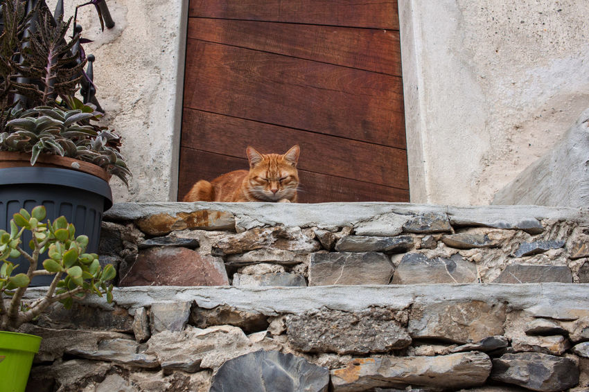 Animal Themes Architecture Building Exterior Built Structure Cat Day Domestic Animals Domestic Cat Door Doorway Feline Ginger Cat Mammal No People One Animal Outdoors Pets Portrait Sitting