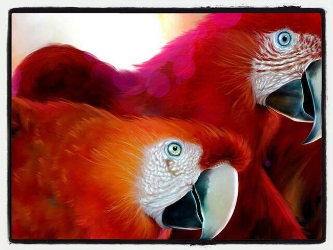 Brasil Birds Presidenteprudente