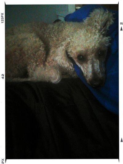 my dog<3
