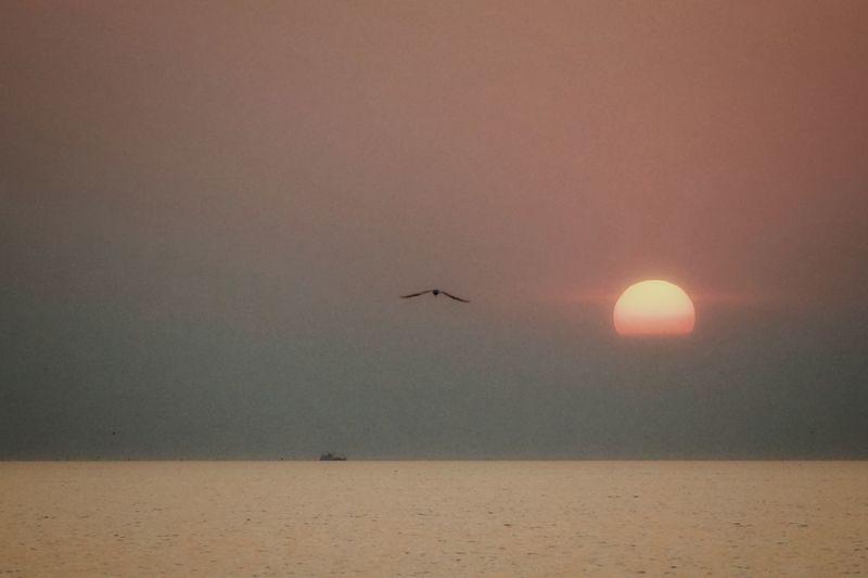 Flying Water Sunset Sea Sun Airplane Silhouette Sky Horizon Over Water Travel