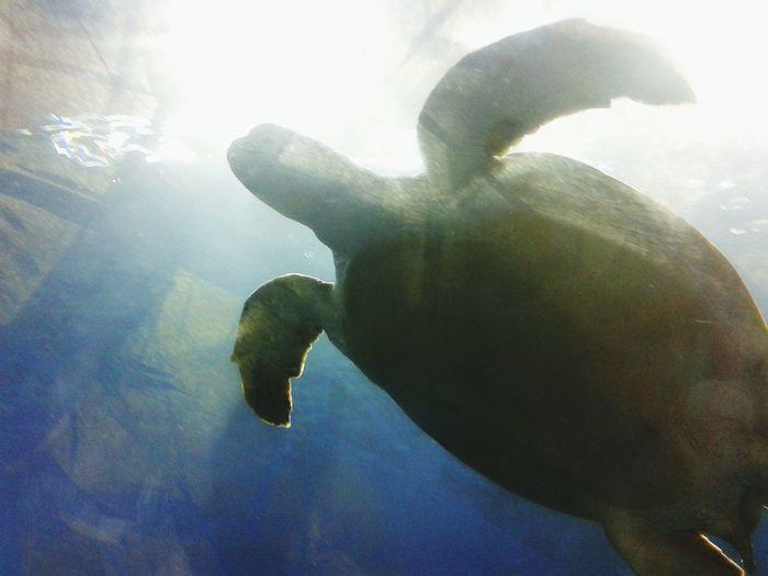 Animals Swimming Tortoise