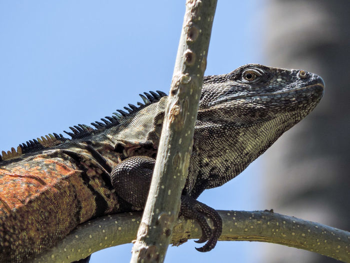 Low angle view of lizard on tree against sky