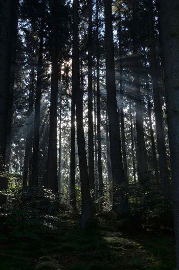 Beauty In Nature Forever Nature Non-urban Scene Outdoors Sauerland Sunbeam Tranquil Scene Trees WoodLand