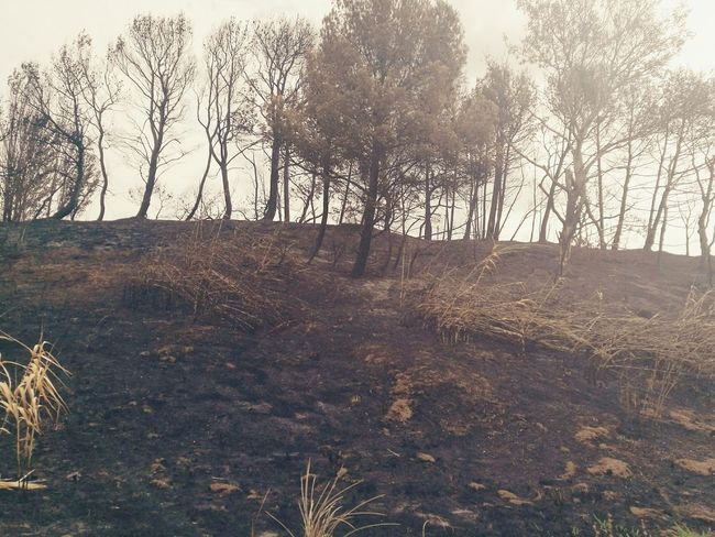 After burn Nature Bushfire Hot2016 -C-
