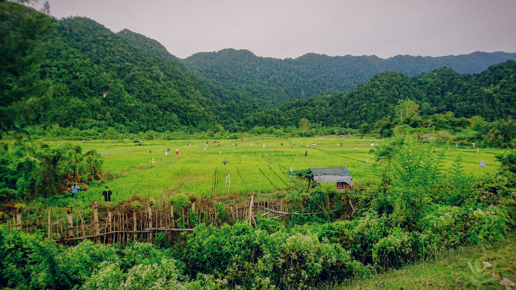 Green Land Nature Nature_collection Nature Photography Travel Photography Agriculture Field Farm Nature Crop  Mountain Landscape Rural Scene Rice Paddy Green Color Growth Rice - Cereal Plant Scenics Outdoors No People Beauty In Nature Tree Plant Irrigation Equipment Tea Crop