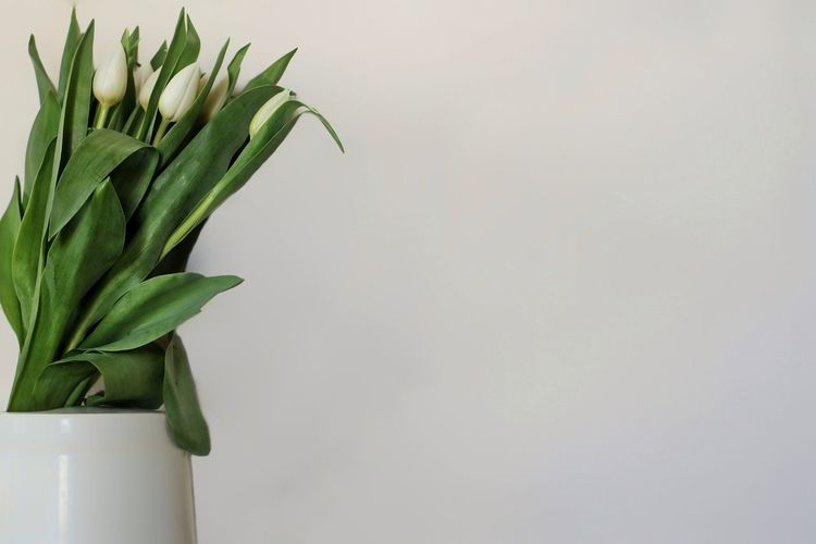 Close-up of white flower vase against wall