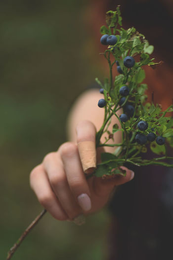 Close-up Day Growth Holding Human Body Part Human Finger Human Hand Nature One Person Outdoors People Plant Real People