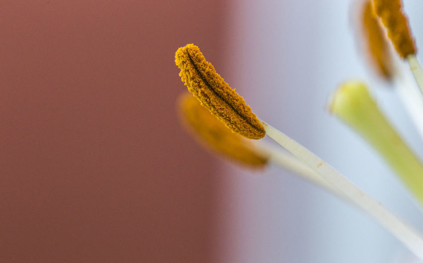 Close-Up Of Flower Stamen