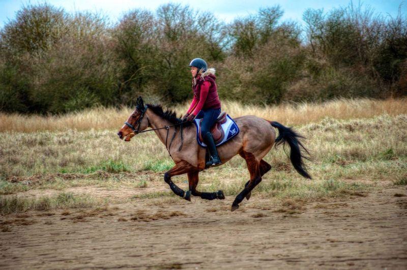 At Theddlethorpe Beach Theddlethorpe Beach Horse Horses Horse Riding Horseriding