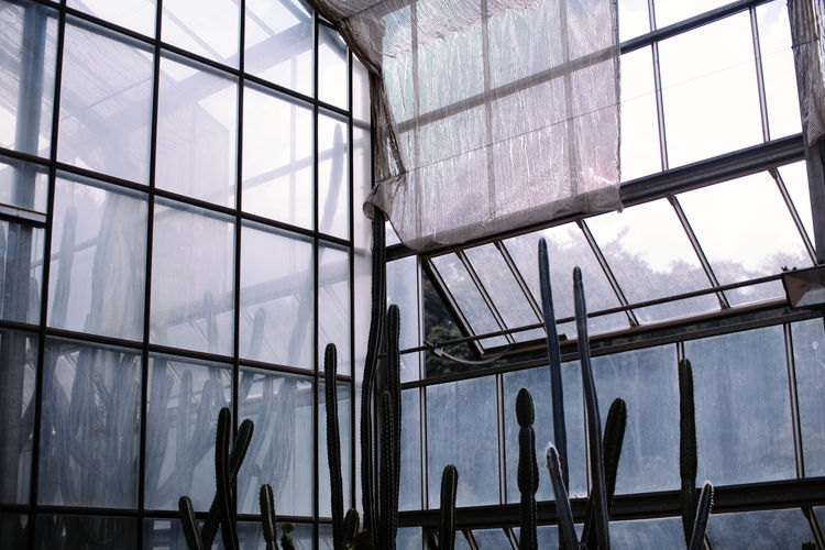 Architecture Blue Cacti Cacti Garden Cactus Cactus Garden Day Fresh On Eyeem  Glass Greenhouse Indoors  Minimal Minimalism Nature Nature Photography No People Plant Plants Sky Window Windows The Week On EyeEm Editor's Picks