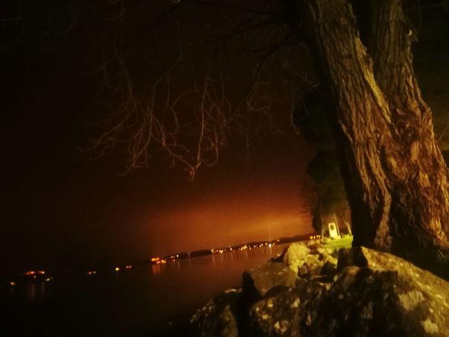 Lake Night Exposure Illuminated Tree Water Sky Coast Scenics