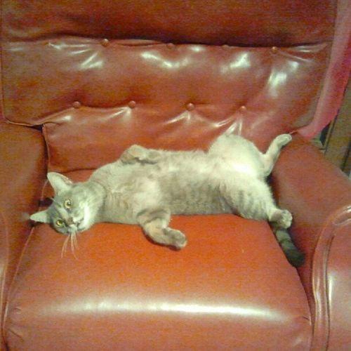 Occhi da schizo! Animal Android Capturemoment Cat
