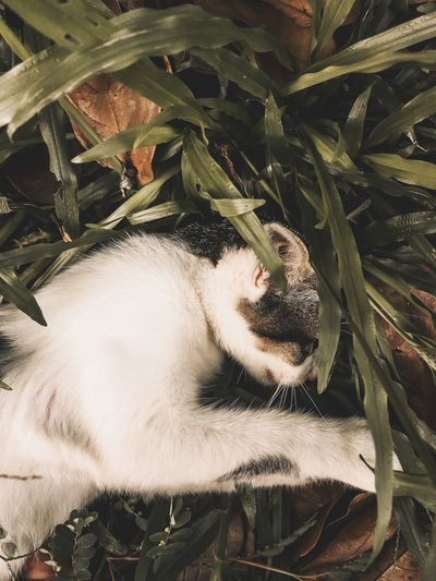 Clingy cat Clingy Cat Plant Growth Plant Part Leaf Nature Beauty In Nature Day Green Color Freshness Outdoors No People Close-up