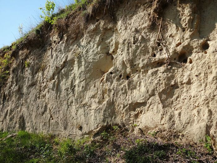 Day Outdoors Close-up Beauty In Nature Kraichgau Hohlweg Geology Loss Loess No People Hollow Way Springtime Sunny Day
