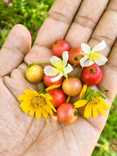 Cropped image of hand holding flowers and fruits