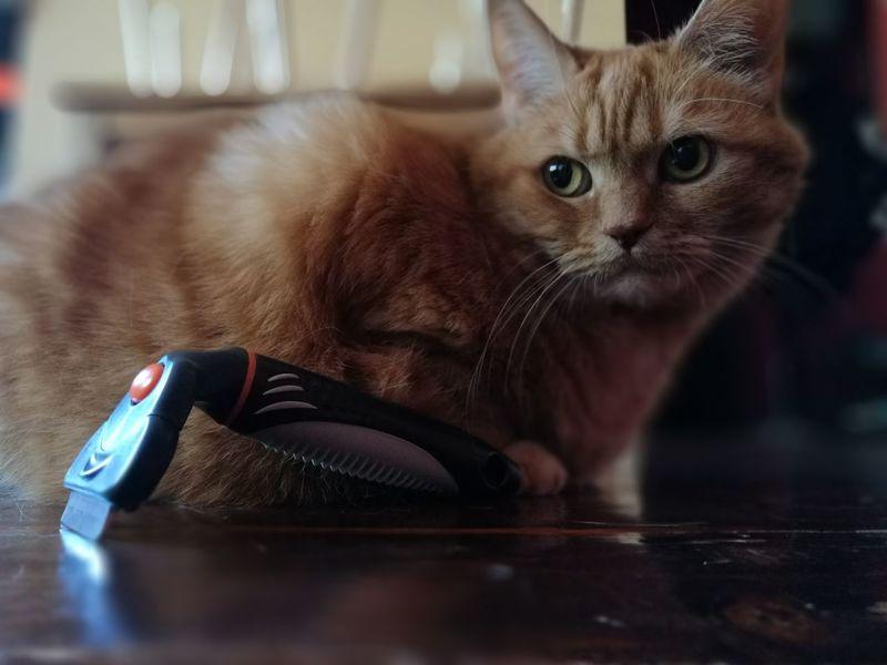 Cat♡ Combing MeNoLikeIt
