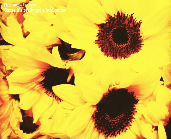 Sunflower@a:(null)] @nagoya Flowers Japan Nagoya