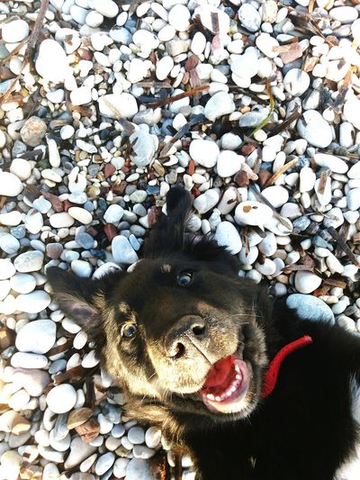 dog face Dog Dogs Of EyeEm Dogsmile Playing Playingtime Bestfriend Humanbestfriends Day Sunlight Sun Happydog Happiness Outdoor Photography Beach Puppy Puppy Love Reptile Pebble Close-up