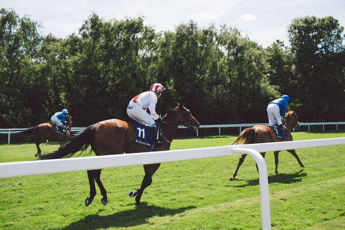 Competition Competitive Sport Day Domestic Animals Epsom Downs Racecourse Field Grass Growth Herbivorous Horse Horse Racing Horseback Riding Jockey Livestock Mammal Nature Outdoors Real People Riding Running Sport Sports Helmet Sports Race Sports Track Tree