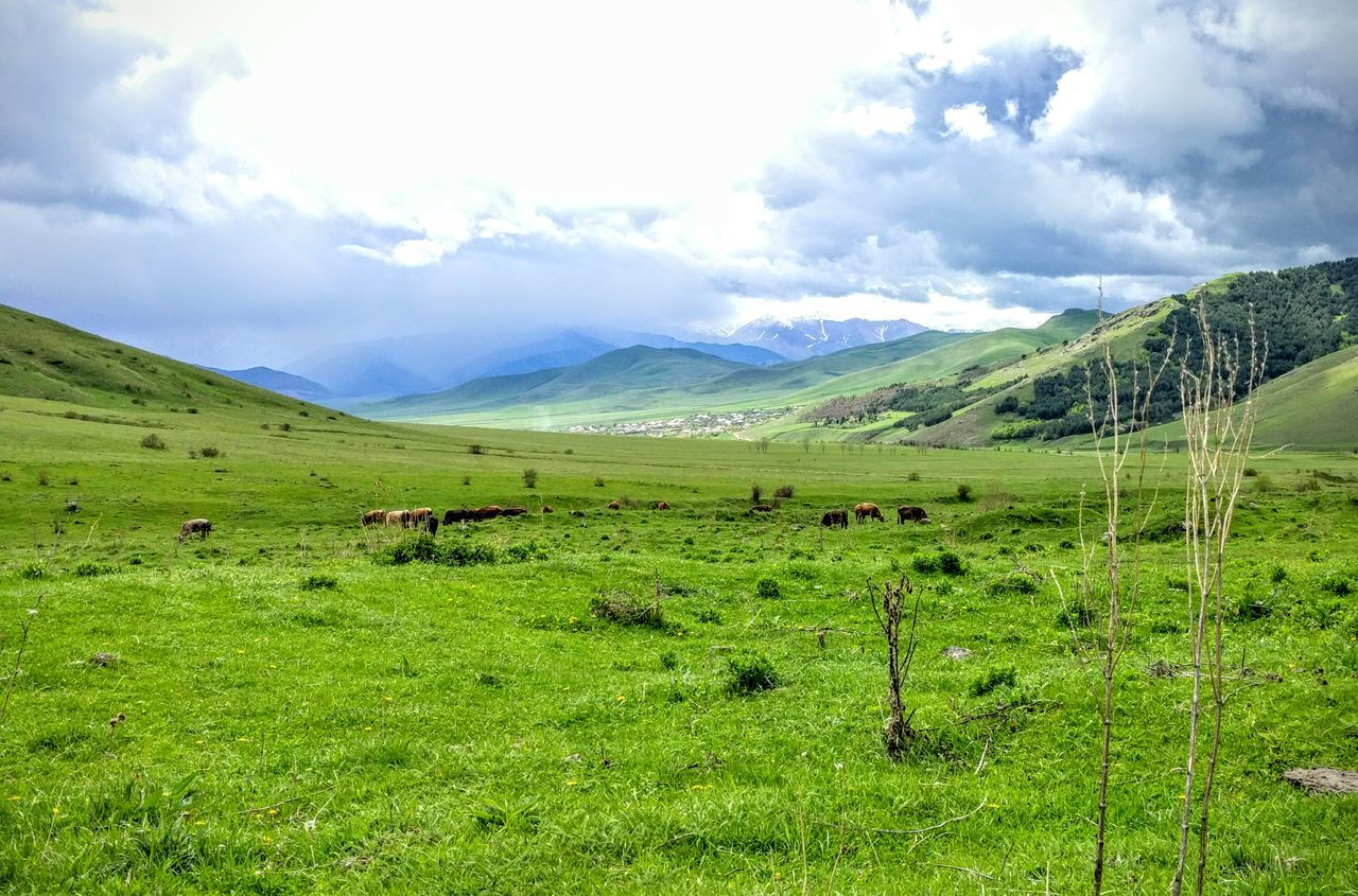 landscape, green color, nature, cloud - sky, mountain, scenics, grass, beauty in nature, sky, mountain range, no people, outdoors, day, mammal