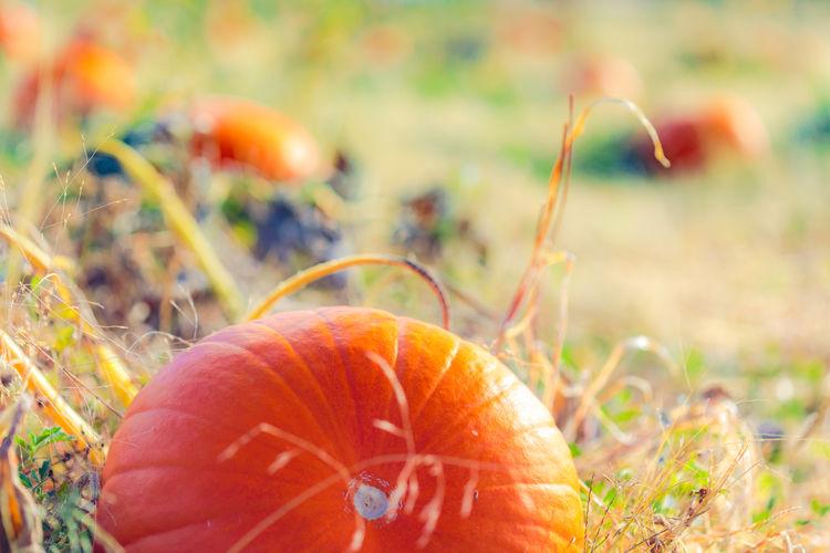 Autumn Close-up