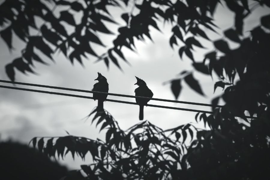 A Pair Bird Photography Black And White Dream Scenics Birdlove Afterrainstorm Welcome To Black